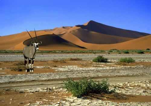 Spiesbock oder Oryxantilope in der Namib – der ältesten Wüste der Welt