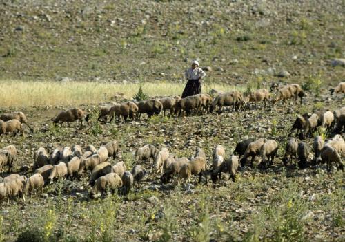 Schafherden in Anatolien