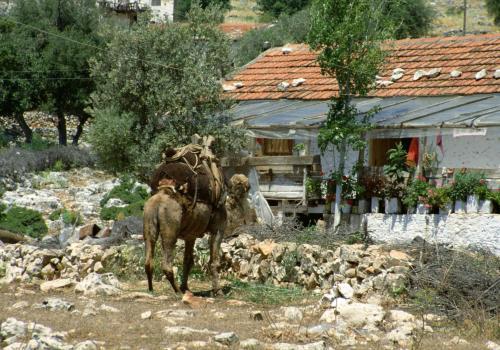 Beladenes Kamel vor einem alten Haus in der Türkei