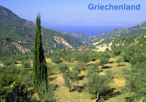 Typische Landschaft mit Olivenhainen am Peloponnese