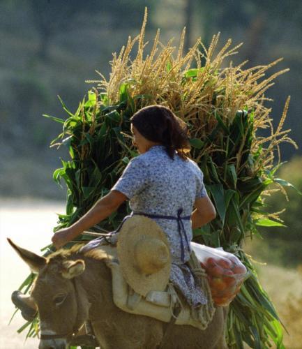 Frau auf einem Esel mit Futter für ihre Tiere, Peloponnese, Griechenland