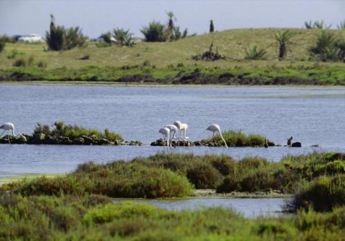 Flamingos in Spanien