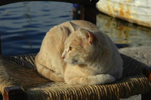 Katze auf Stuhl im Hafenviertel von Chania, Kreta