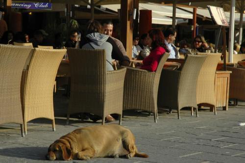 Cafés Restaurants Bars Tavernen im Hafenviertel von Chania auf Kreta