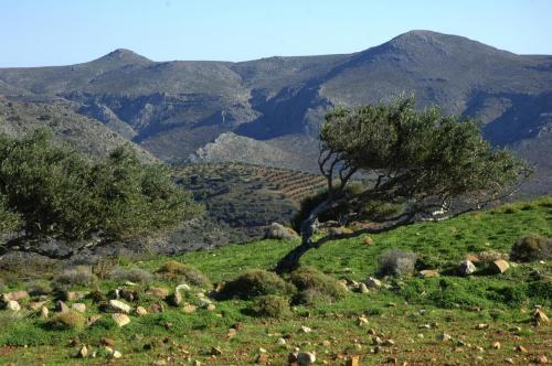 Landschaften im Osten Ketas mit Olivenhainen; Griechenland