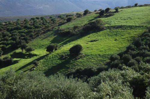 Landschaften im Osten Ketas mit weitläufigen Olivenhainen; Griechenland