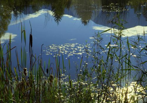 Biotopartige Weiherlandschaft im Murnauer Moos,