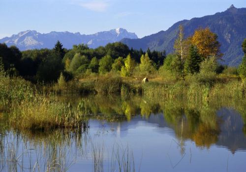 Biotopartige Weiherlandschaft im Murnauer Moos