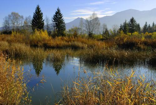 Weiherlandschaft im Murnauer Moos