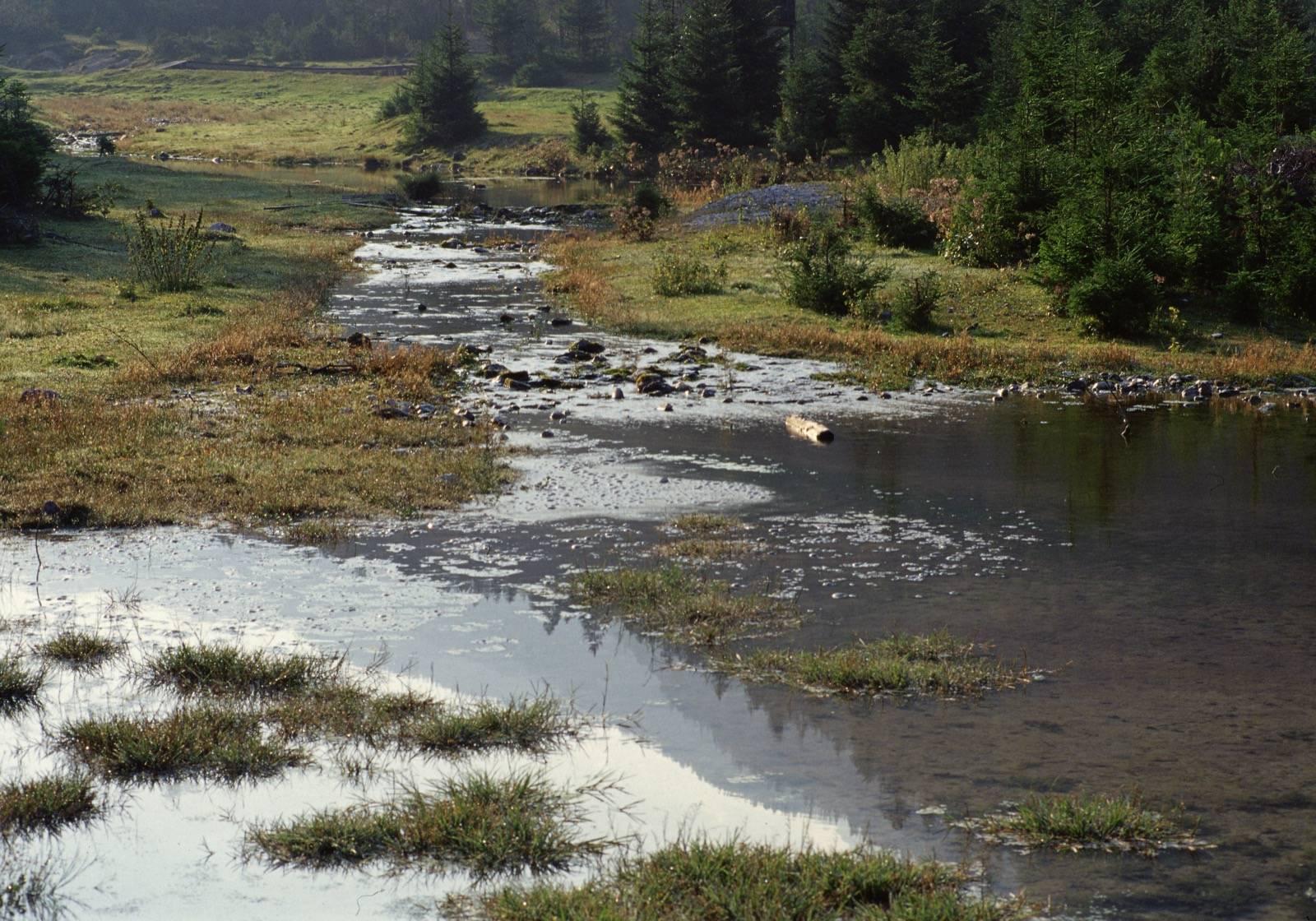 Bäche und Quellen in der Nähe des Isarursprunges