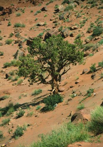 Wüstenlandschaft im Monument Valley mit Baum