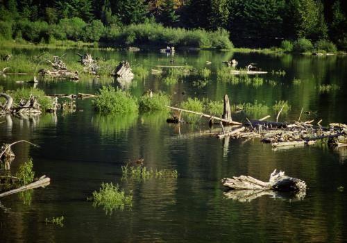 Feuchtgebiete auf Vancouver Island