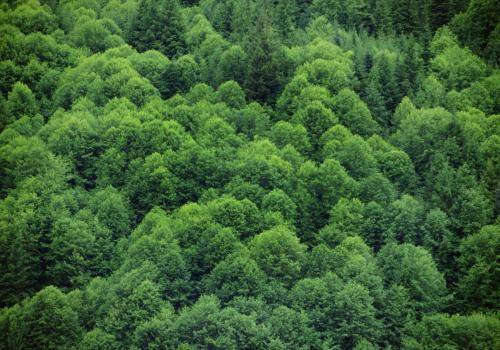 Kanadischer Urwald  an der Inside Passage