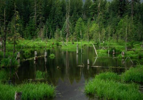 Feuchtgebiete auf der Strecke in den Norden Kanadas