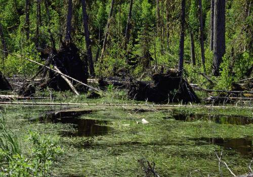 Kanadische Wasser- und Sumpflandschaft