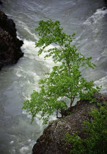 Wilder Fluss bei Hazelton