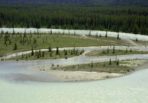 Athabasca River, Icefields Parkway