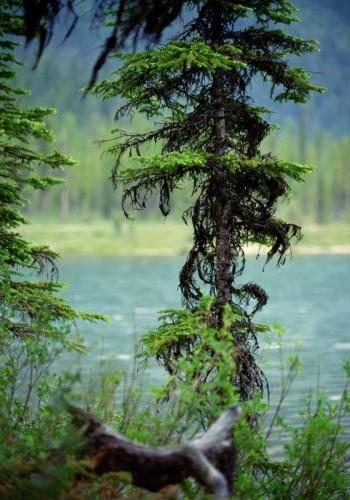 Emerald Lake im Yoho Nationalpark