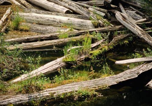 Verrottende Holzstämme