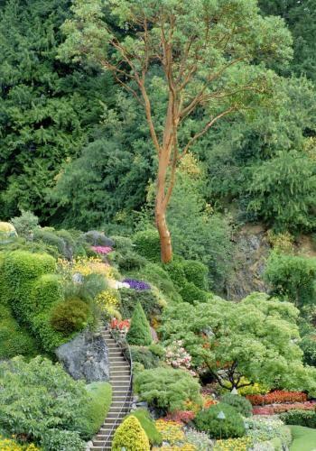 Blühende Botanik im Butchart Gardens auf Vancouver Island