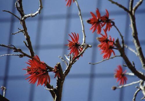 Blühender Baum, im Hintergrund Fensterfront
