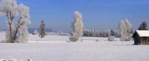 Raureifstimmung im Loisach Kochelsee Moor bie Sindelsdorf, Bayern