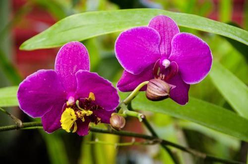 Königlicher Botanischer Garten Peradenija, Sri Lanka