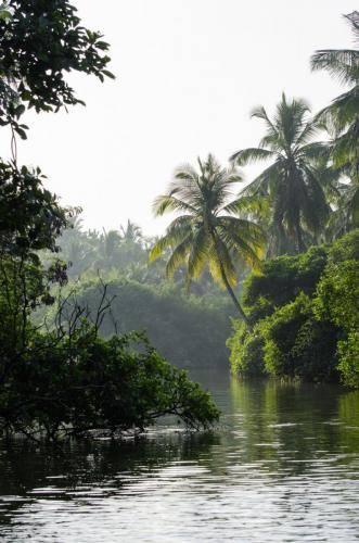 Tropischer Urwald am Maha Oya Fluss, Sri Lanka