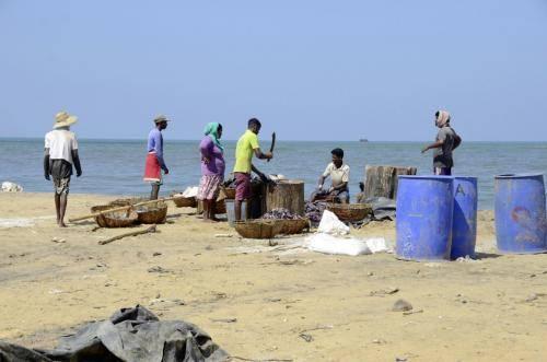 Ausnehmen und Aufbereitung des Fischfanges in Sri Lanka