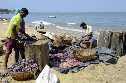 Ausnehmen und Aufbereitung des Fischfanges