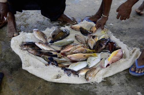 Tropische Fische aus dem indischem Ozean in Sri Lanka