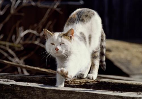 Katze die sich gerade wohlig streckt