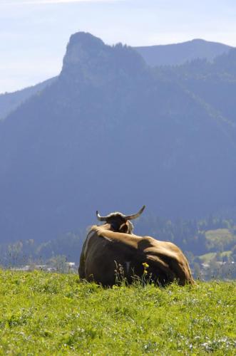Kuh auf einer Gebirgsweide