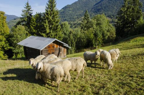 Schafherde im Gebirge
