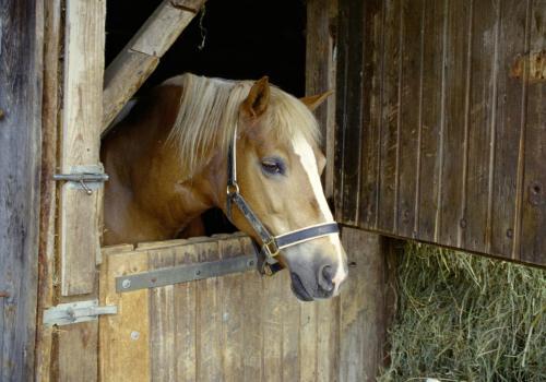 Pferd in der Box