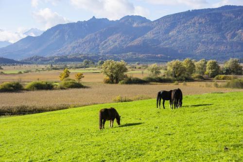 Pferde auf der Weide im Voralpenland; Bayern