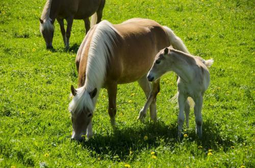 Pferde mit Fohlen auf der Weide