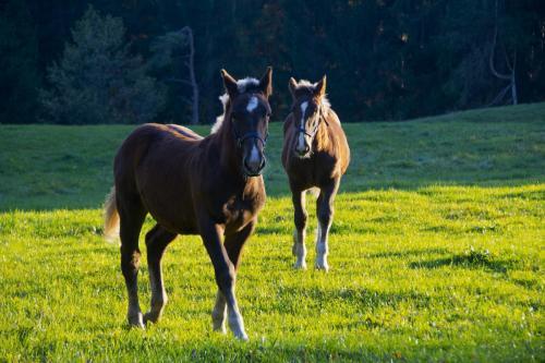 Zwei Pferde im Abendlicht