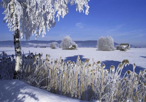 Winterstimmung mit Raureif auf den Bäumen bei Schlehdorf; Oberbayern