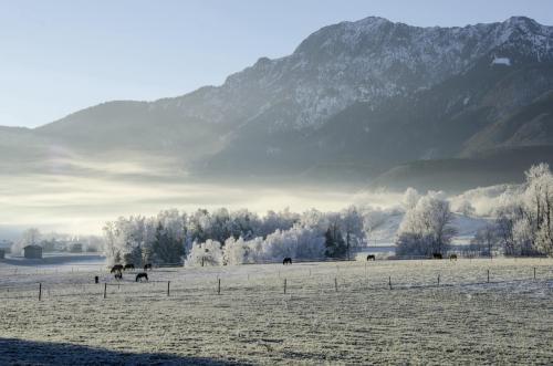 Raureif und Frühnebel im Oberland Nähe Kochel, Pferde im Vordergrund, Bayern