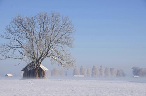 Verschneite Winterlandschaft bei Schlehdorf am Kochelsee im Morgennebel, Bayern