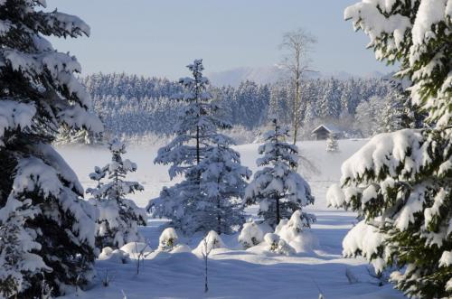 Verschneite Baumgruppe in einer Winterlandschaft; Oberbayern