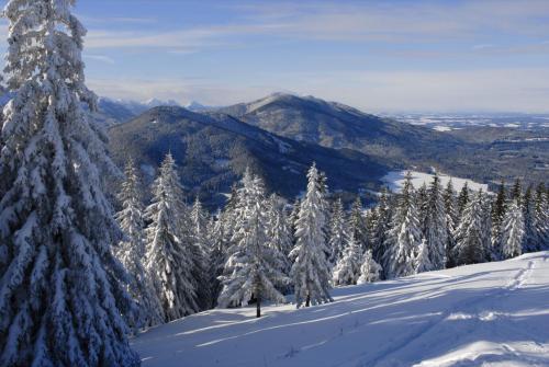 Winter in den Bergen, am Hörnle bei Kohlgrub, Oberbayern