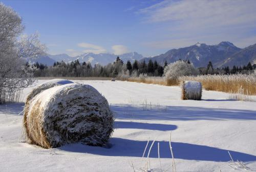 Winter im Murnauer Moos