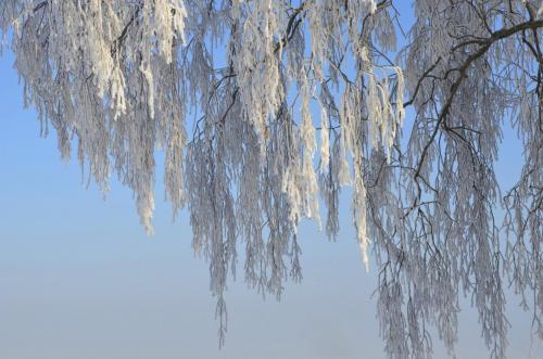 Raureif auf Bäumen und Zweigen
