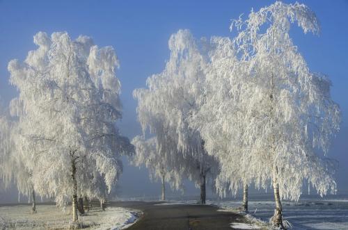 Raureif auf Bäumen und Zweigen im Winter