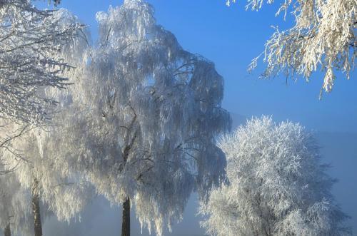 Raureif auf den Bäumen in einer winterlichen Märchenlandschaft, Bayern